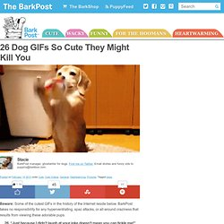 Cute Dog GIFS | BarkPost