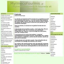 Cuticule - [MyrmecoFourmis.fr fourmis et insectes]