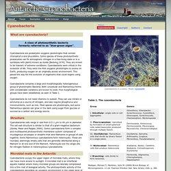 Antarctic Cyanobacteria