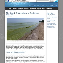 The Rise of Cyanobacteria in Freshwater Resources
