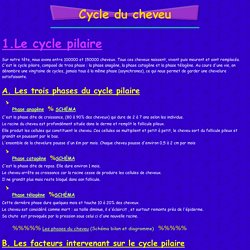 Cycle du cheveu