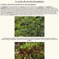 Cycle de vie des bryophytes