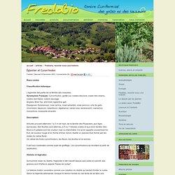 Églantier et Cynorrhodon - Association FredoBio - Contre l'uniformité des goûts et des couleurs