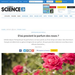 D'où provient le parfum des roses?