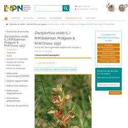 Dactylorhiza viridis-Orchis vert, Orchis grenouille, Satyrion vert-Présentation
