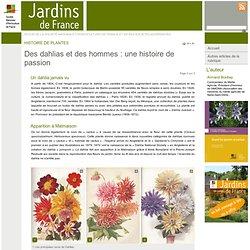 Des dahlias et des hommes : une histoire de passion - Jardins de France