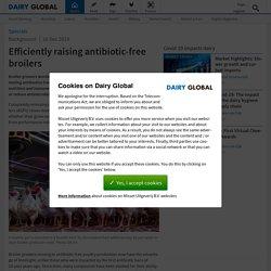 DAIRY GLOBAL 16/12/19 Efficiently raising antibiotic-free broilers