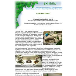 Dakota Dinosaur Museum - Exhibits