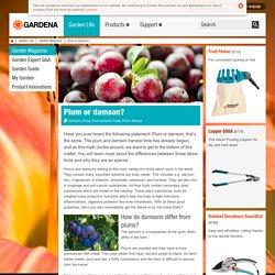 Plum or damson? - Fruits, Fruit Orchard, Plum, Damson, Recipe, Food