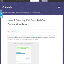 How A Dancing Cat Doubled Our Conversion Rate
