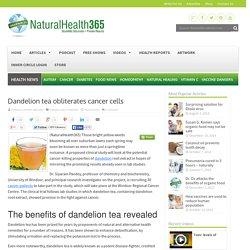 Dandelion tea obliterates cancer cells
