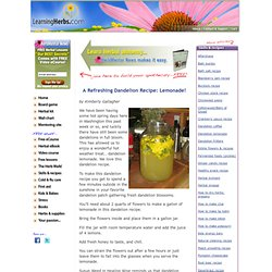 Dandelion Recipe: Lemonade
