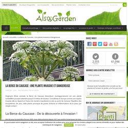 La Berce du Caucase : Une plante invasive et dangereuse