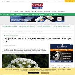 """A Alnwick, les plantes """"les plus dangereuses d'Europe"""" dans le jardin qui tue - Sciencesetavenir.fr"""