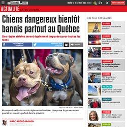 Chiens dangereux bientôt bannis partout au Québec
