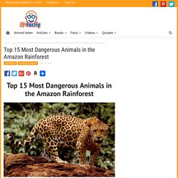 Top 15 Most Dangerous Animals in the Amazon Rainforest - Fun Facts You Need to Know!