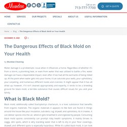 The Dangerous Effects of Black Mold on Your Health