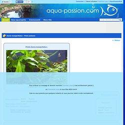 Aqua-passion