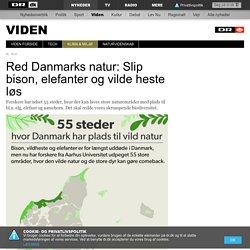 Red Danmarks natur: Slip bison, elefanter og vilde heste løs