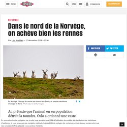 Dans le nord de la Norvège, onachève bien lesrennes