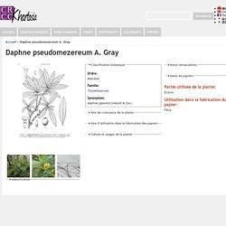 Daphne pseudomezereum A. Gray
