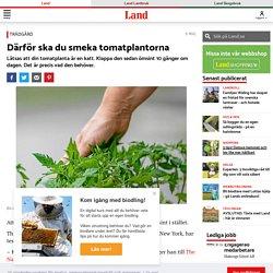 Därför ska du smeka tomatplantorna