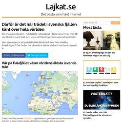 Därför är det här trädet i svenska fjällen känt över hela världen
