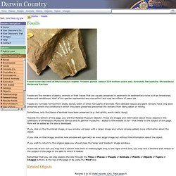 Darwin Country - Fossils