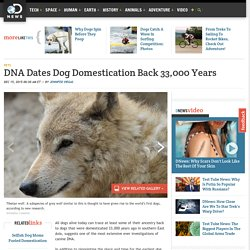 DNA Dates Dog Domestication Back 33,000 Years