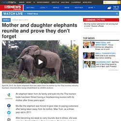 Mother and daughter elephants reunite and prove they don't forget
