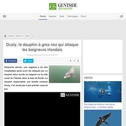 Dusty, le dauphin à gros nez qui attaque les baigneurs irlandais