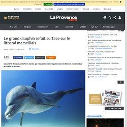 Le grand dauphin refait surface sur le littoral marseillais