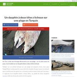 Un dauphin à deux têtes s'échoue sur une plage en Turquie