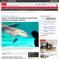 Japon: la moitié des dauphins d'aquariums capturés de manière décriée
