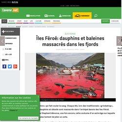Îles Féroé: dauphins et baleines massacrés dans les fjords - Toute l'actu 24h/24 sur Lavenir.net
