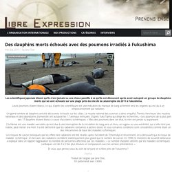 Des dauphins morts échoués avec des poumons irradiés à Fukushima Libre Expression