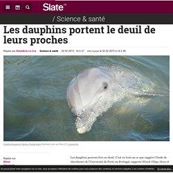 Les dauphins portent le deuil de leurs proches