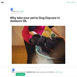 Why take your pet to Dog Daycare in Ashburn VA. – DebTech LLC – Medium