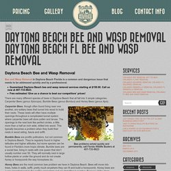 Daytona Beach Bee and Wasp Removal Daytona Beach Fl Bee and Wasp Removal - FL Wildlife Busters