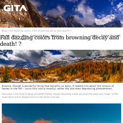 Fall dazzling colors from browning decay and death! ?