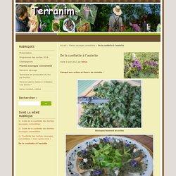 Canapé aux orties & fleurs de violette