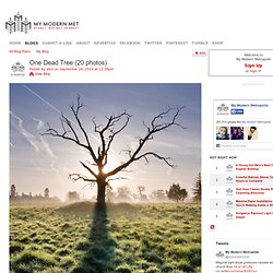 One Dead Tree (20 photos) - My Modern Metropolis - StumbleUpon