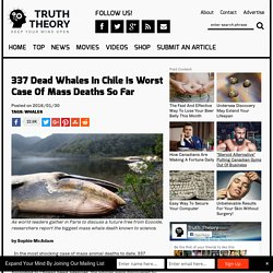 337 Dead Whales In Chile Is Worst Case Of Mass Deaths So Far