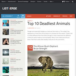 Top 10 Deadliest Animals