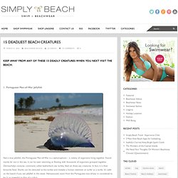 15 Deadliest Beach Creatures | Simply Beach Blog