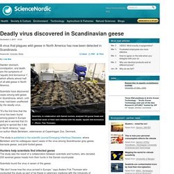 SCIENCE NORDIC 02/12/15 Deadly virus discovered in Scandinavian geese