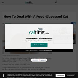 How To Deal With A Food-Obsessed Cat - CatTime