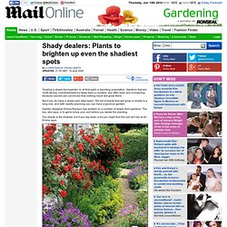 Shady dealers: Plants to brighten up even the shadiest spots