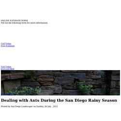 Dealing with Ants During the San Diego Rainy Season