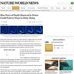 Blue Wave of Death Observed in Worm Could Point to Ways to Delay Dying : Animals